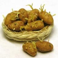 Keep Potatoes From Budding